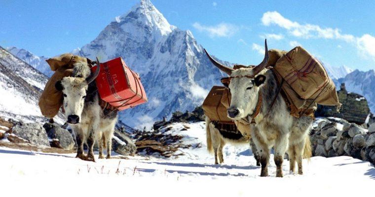 Od hut stali po Himalaje. Field recordingowe nowości w Saamleng.